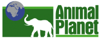 Tune in and play animal planet games, find out about the animal planet features, and watch videos or live cams of humpback whales, a gorilla, and shark.